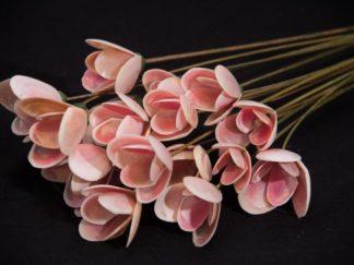 tulipa roda